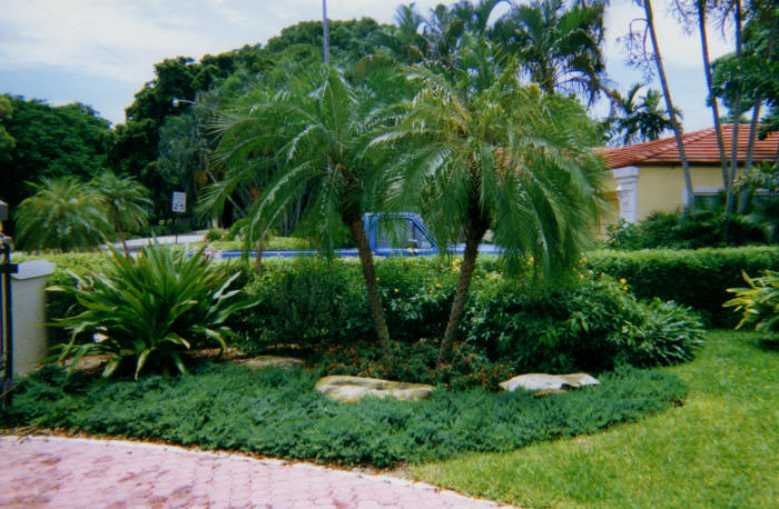 Palms and Ground Cover Here we planted 2 palm and a variety of other decorative plants and ground cover as well as the large rocks.