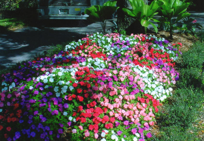 Flower Bed: We do flower beds like this all the time.